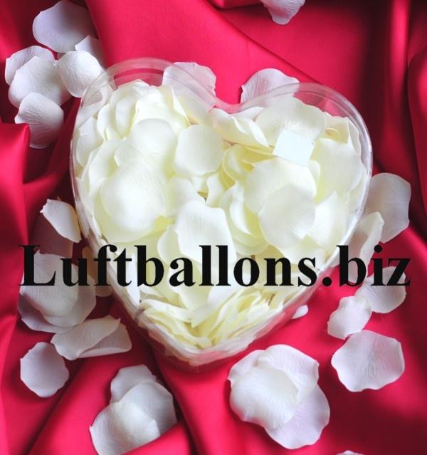 Rosenblätter in Elfenbein, 200 Stück in dekorativer Herzbox